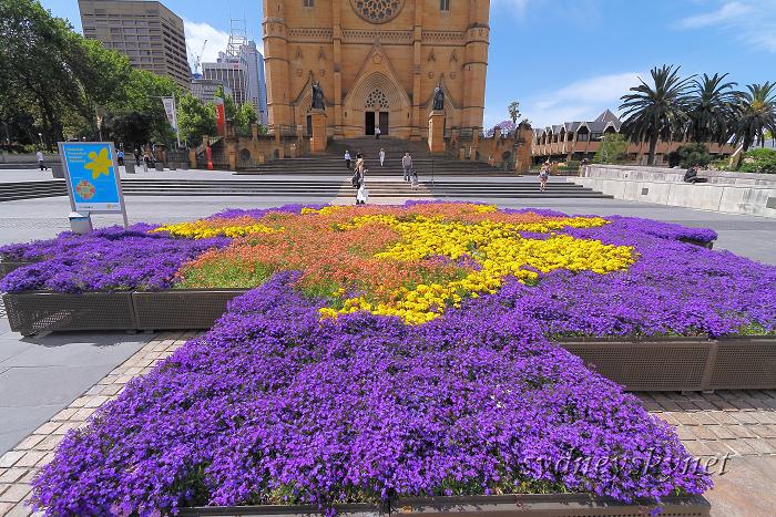 花と大聖堂_f0084337_2124843.jpg