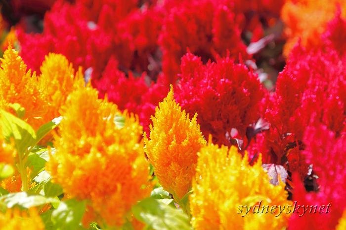 花と大聖堂_f0084337_213034.jpg