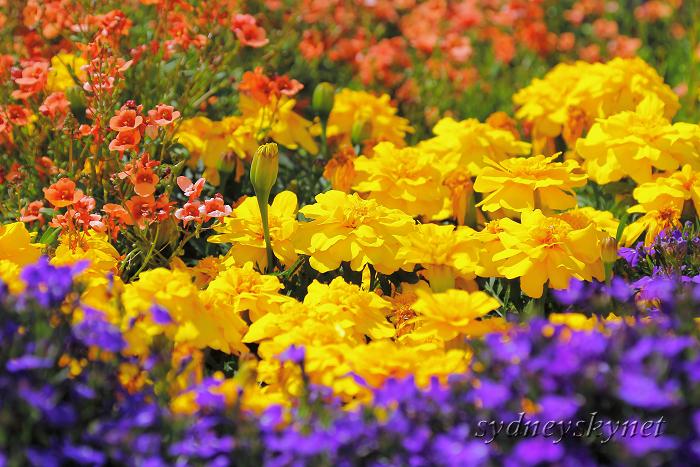 花と大聖堂_f0084337_213151.jpg
