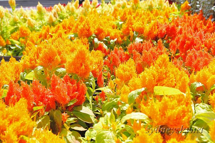 花と大聖堂_f0084337_2132315.jpg