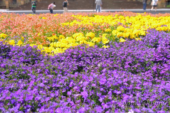 花と大聖堂_f0084337_213834.jpg