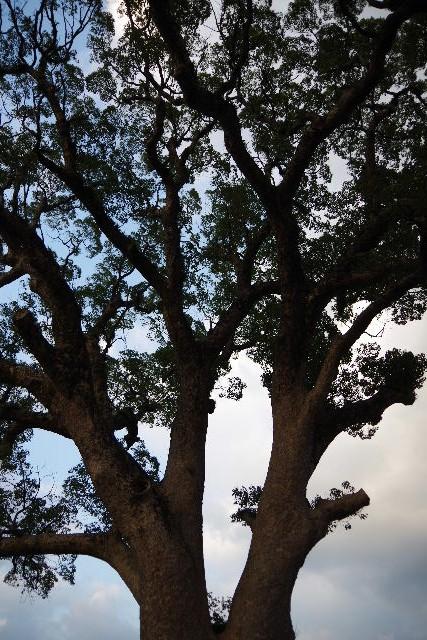 篠栗の秋・・・一ノ滝寺と「港屋」と楠木と鯉_c0011649_23573964.jpg