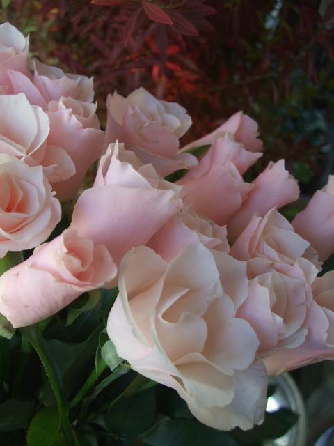 オークリーフ(市川バラ園の花たち)_f0049672_17412226.jpg