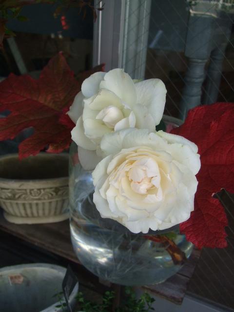 オークリーフ(市川バラ園の花たち)_f0049672_17431768.jpg
