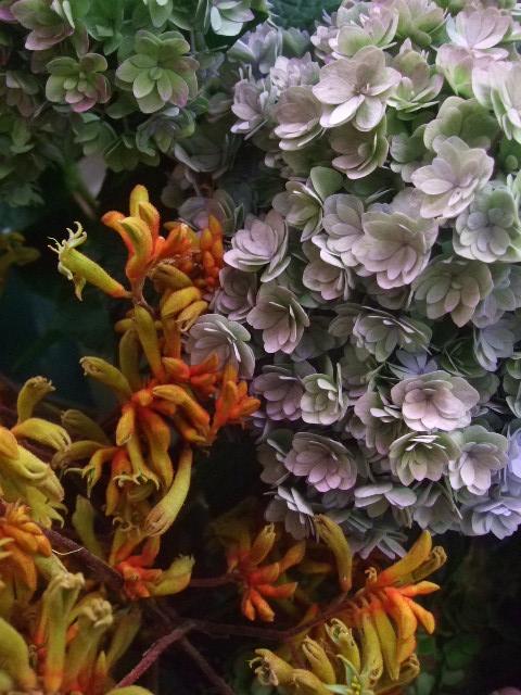 オークリーフ(市川バラ園の花たち)_f0049672_17565780.jpg