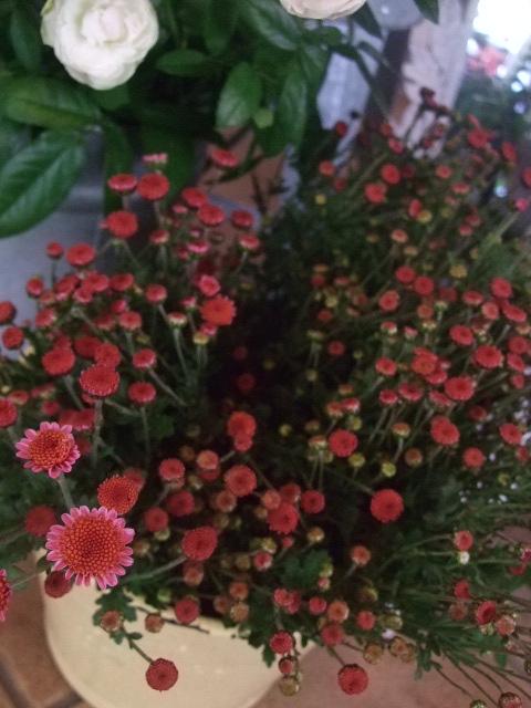 オークリーフ(市川バラ園の花たち)_f0049672_1757341.jpg