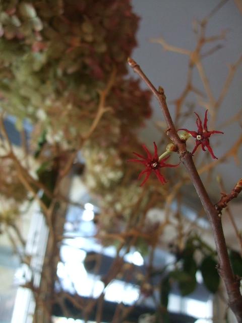 オークリーフ(市川バラ園の花たち)_f0049672_17591126.jpg