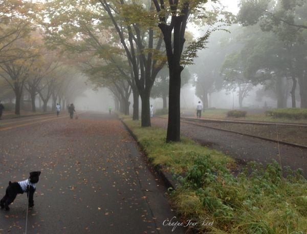 目の前が真っ白で公園が隠れちゃったよ…_d0266681_8554386.jpg