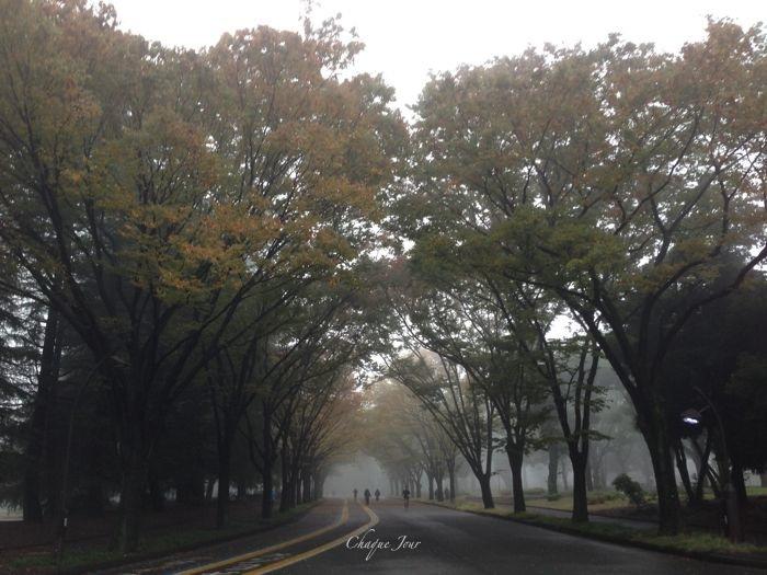 目の前が真っ白で公園が隠れちゃったよ…_d0266681_856316.jpg