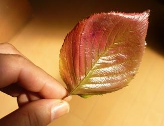 落ち葉や松ぼっくりでガーランド作り。_e0188087_2159649.jpg