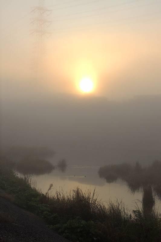 シメが飛び出した/濃霧でした/また車を突かれた_b0024798_1025083.jpg