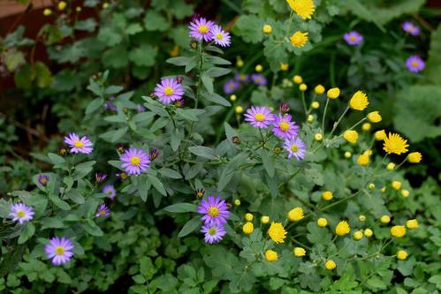 秋 庭の花だより(続) _d0150720_633127.jpg