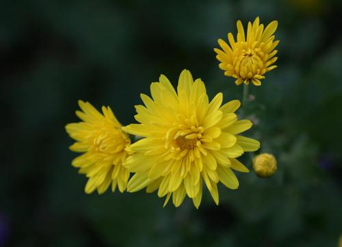 秋 庭の花だより(続) _d0150720_6332155.jpg