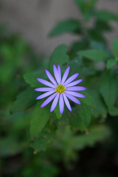 秋 庭の花だより(続) _d0150720_736490.jpg