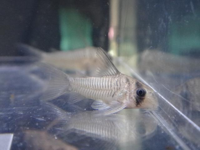 121108 熱帯魚・水草_f0189122_1345886.jpg