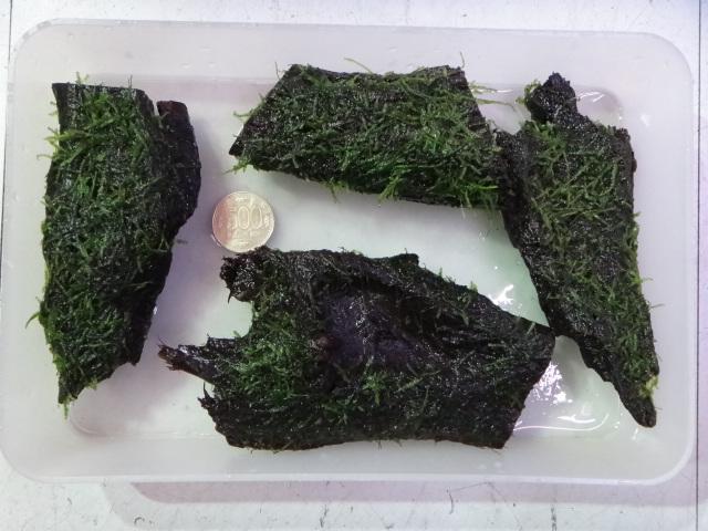 121108 熱帯魚・水草_f0189122_1365349.jpg