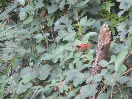 うみべの森を育てる会:定例植物観察 in せんなん里海公園_c0108460_21265824.jpg