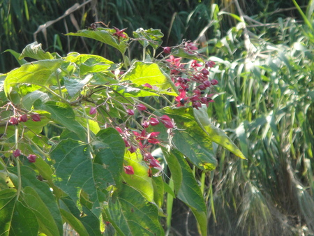 うみべの森を育てる会:定例植物観察 in せんなん里海公園_c0108460_21372167.jpg