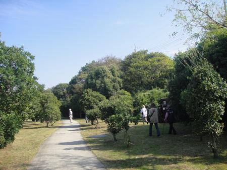 うみべの森を育てる会:定例植物観察 in せんなん里海公園_c0108460_21453561.jpg