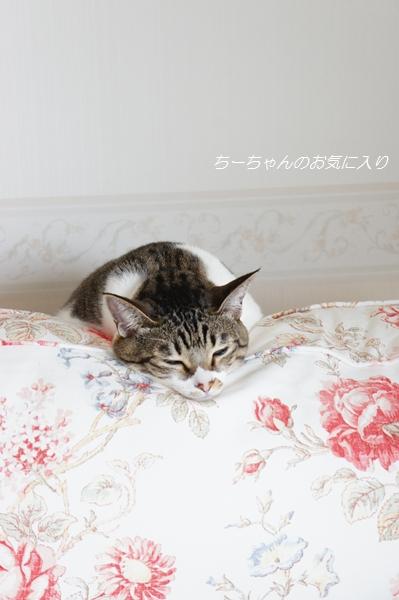 今朝のちぃちゃん_e0236480_10121565.jpg