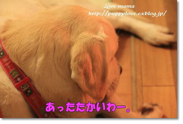 b0136683_20351937.jpg