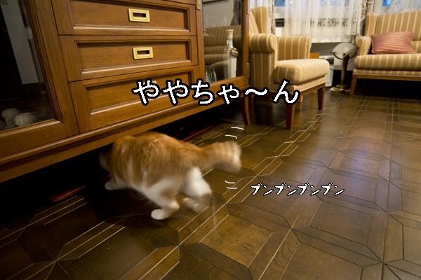b0141397_117367.jpg