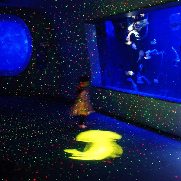 新江ノ島水族館のクラゲ_b0145398_222407.jpg