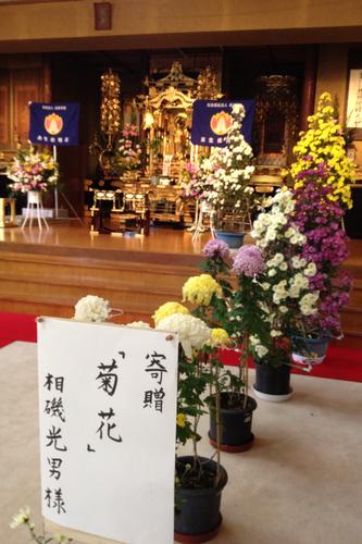 11月15日10時 正蓮寺にて 楽生寿光園児七五三お祝い法要一般公開_b0188106_21444687.png