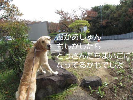 b0008217_22301833.jpg