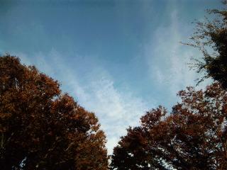 ある秋の午後に_a0103940_505553.jpg