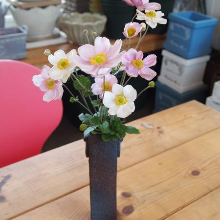 秋明菊(シュウメイギク)を花瓶に_a0292194_16234693.jpg
