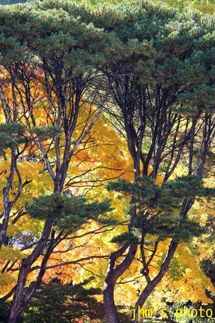 紅葉がいっぱい、おまけは秋の薔薇_a0158797_0495114.jpg