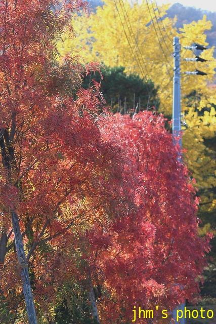 紅葉がいっぱい、おまけは秋の薔薇_a0158797_0512075.jpg