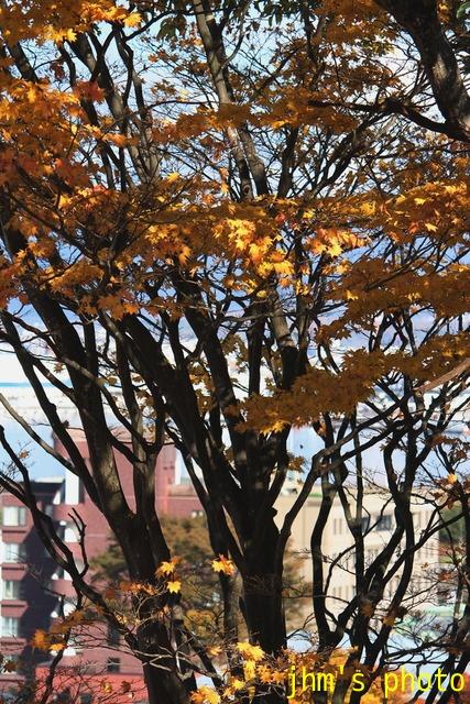 紅葉がいっぱい、おまけは秋の薔薇_a0158797_0535467.jpg