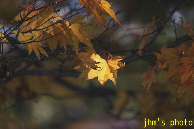 紅葉がいっぱい、おまけは秋の薔薇_a0158797_053874.jpg