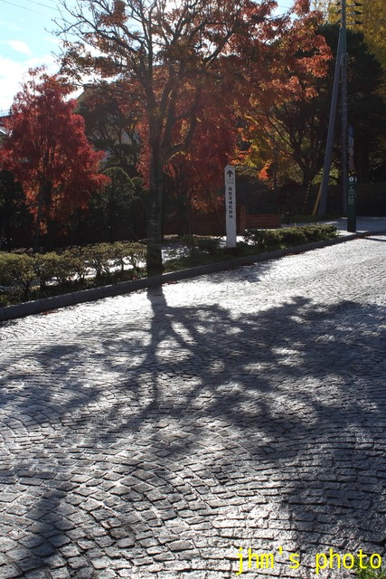 紅葉がいっぱい、おまけは秋の薔薇_a0158797_055513.jpg