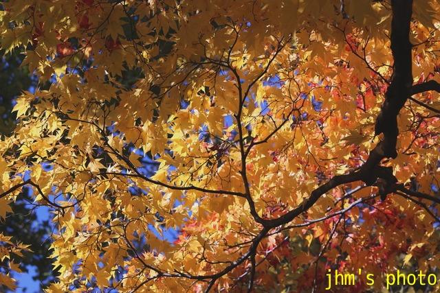 紅葉がいっぱい、おまけは秋の薔薇_a0158797_0591898.jpg