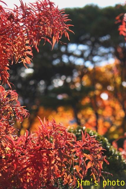 紅葉がいっぱい、おまけは秋の薔薇_a0158797_10112.jpg