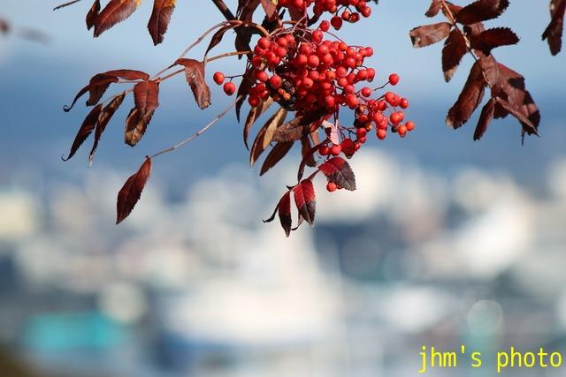 紅葉がいっぱい、おまけは秋の薔薇_a0158797_104819.jpg