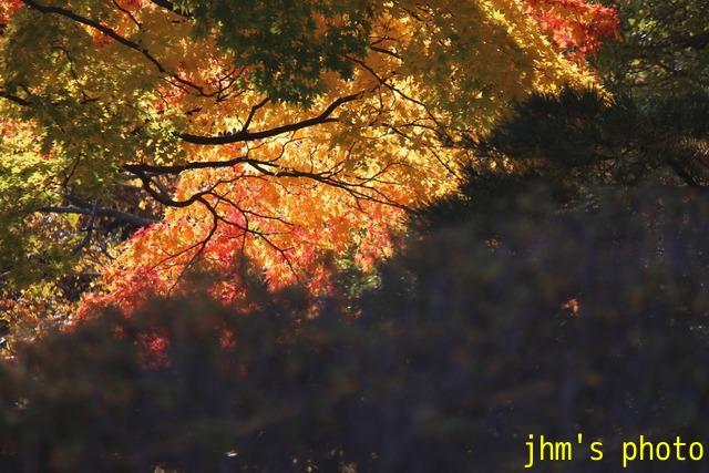 紅葉がいっぱい、おまけは秋の薔薇_a0158797_113587.jpg