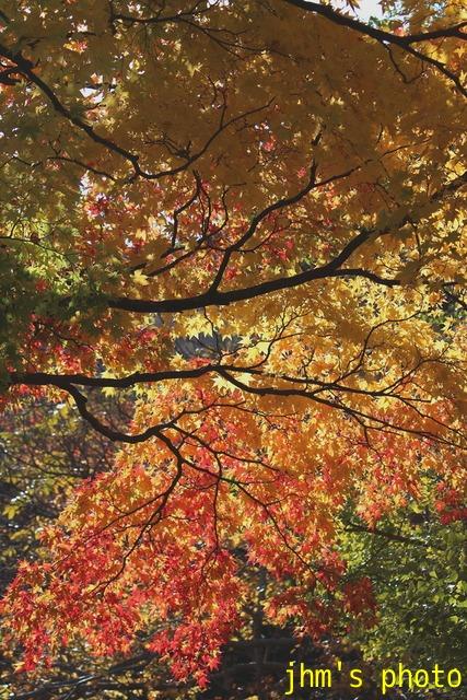 紅葉がいっぱい、おまけは秋の薔薇_a0158797_11526.jpg