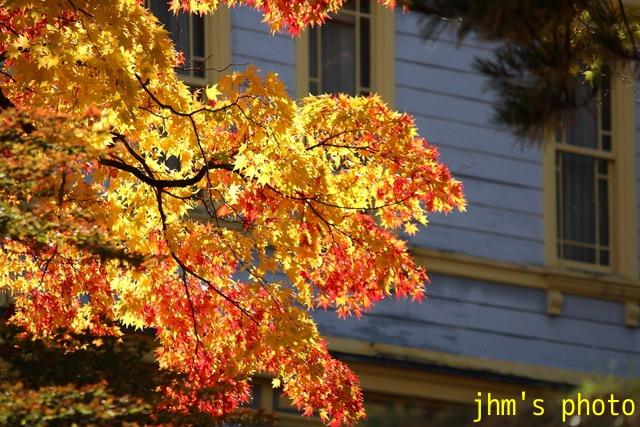 紅葉がいっぱい、おまけは秋の薔薇_a0158797_1181100.jpg
