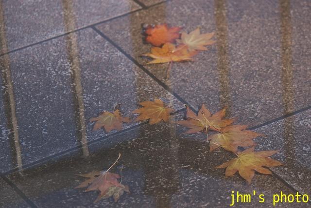 紅葉がいっぱい、おまけは秋の薔薇_a0158797_1194060.jpg