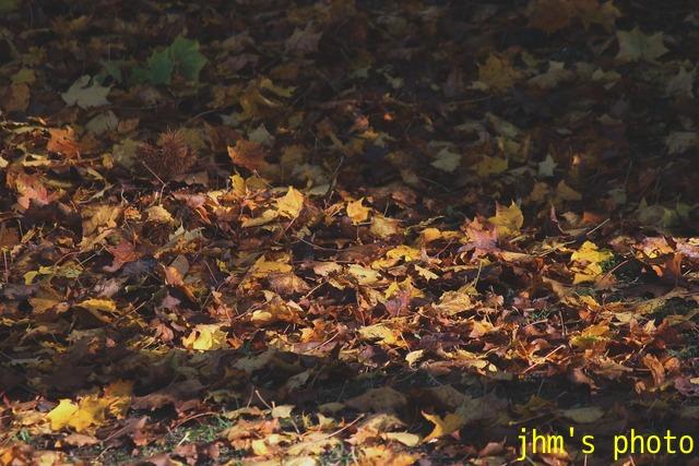 紅葉がいっぱい、おまけは秋の薔薇_a0158797_120589.jpg