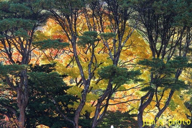 紅葉がいっぱい、おまけは秋の薔薇_a0158797_132989.jpg