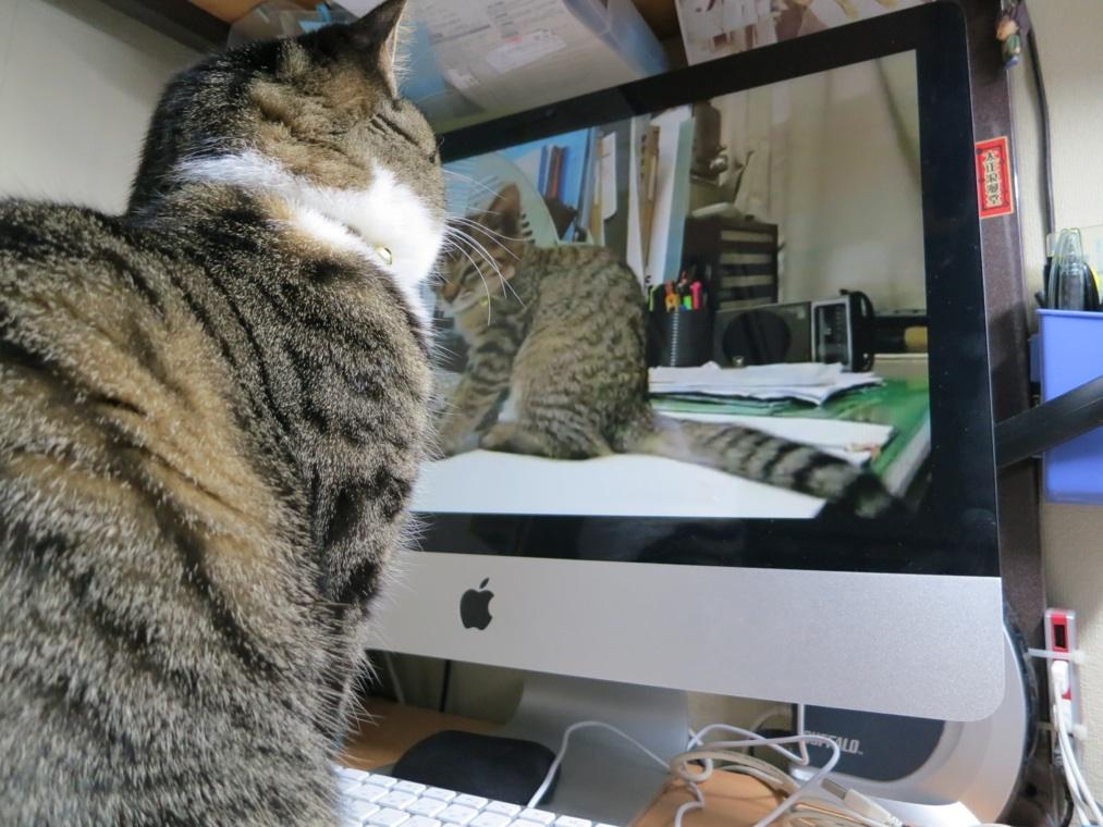 【猫】ちょっとしたこと_f0141609_21475093.jpg