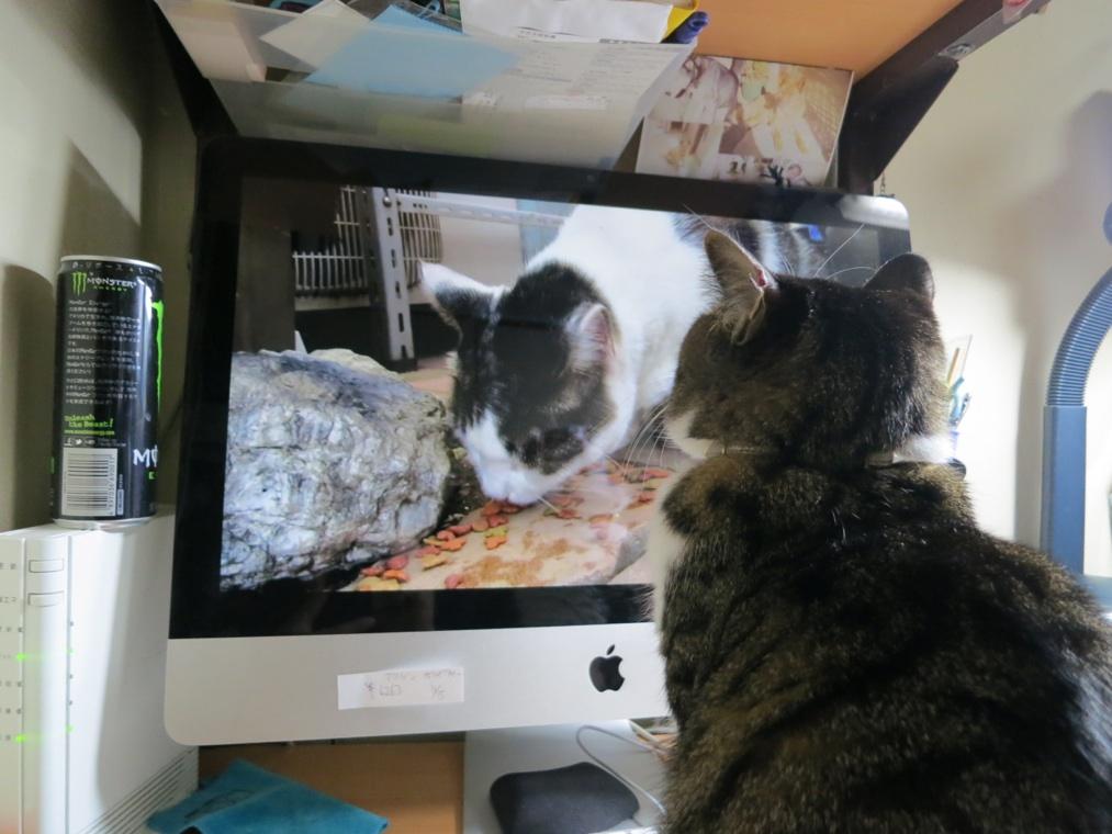 【猫】ちょっとしたこと_f0141609_21475579.jpg