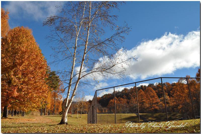 周囲の景観抜群のチェルトの森 オムニテニスコートで・・・_d0109415_1675118.jpg