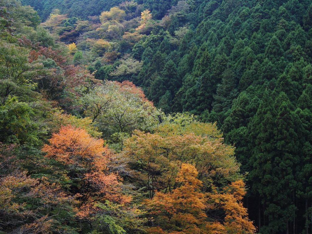 丹波山渓谷の紅葉_d0192516_11171330.jpg