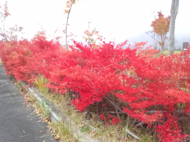 11月10日(土) ・・・ 晩秋登山!_f0101226_20351090.jpg